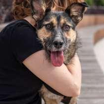 Собачка Терра очень ждет свою семью, в Москве