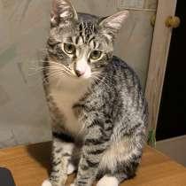 Котёнку мальчику нужен дом и семья, в Домодедове