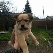 Отдам щенка, в Егорьевске