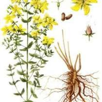 Аптечные травы. Семена для выращивания, в Иркутске