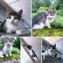 Малышка котенок 1,5 месяца, в Раменское