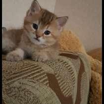 Продажа котят, в Ухте