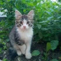 Котенок девочка ласковая сообразительная, приучена к лотку, в Электростале