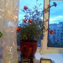Цветок, в Новосибирске