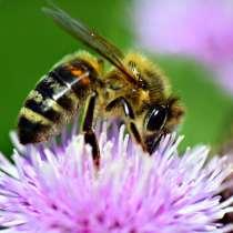 Пчеловодство, в Санкт-Петербурге
