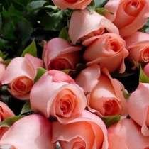 Розы, в Серпухове
