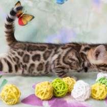 Роскошные бенгальские котята), в Челябинске