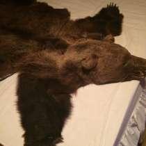 Шкура медведя, в Челябинске