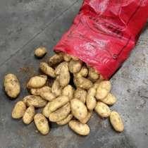 Картофель молодой (ранний), в Новороссийске