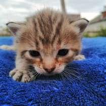 Котенок, в Задонске