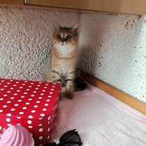Мальчик полностью b 24 готов к переезду в новый дом!, в г.Астана