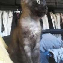 Котенок крысоловки, в Краснодаре