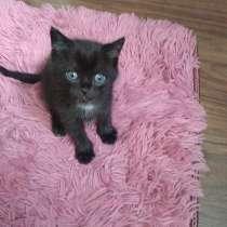Черный котенок, 1 месяц мальчик, в Воткинске