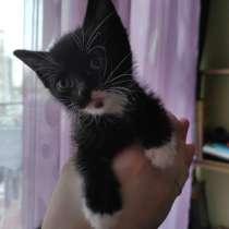 Отдам котёнка даром, в г.Тбилиси