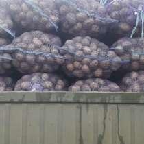 Картофель оптом Галла5+, в Крымске