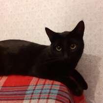 Помогите коту Тимоше найти новый дом!, в Москве
