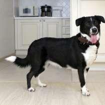 Лёля - задорная собака ищет постоянный дом!, в Москве