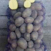 Картофель, лук, в Каневской