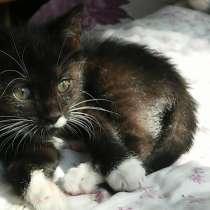 Черно-белый котенок бесплатно, в г.Мозырь