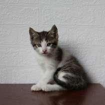 Очень симпатичные котятки, мальчик и девочки, в Армавире