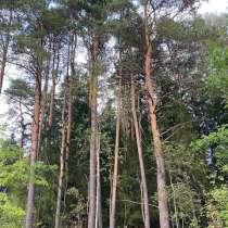 Продается лесной участок 25 соток, в Истре