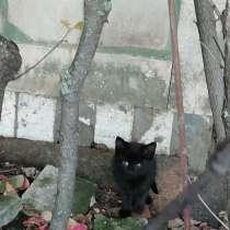 Котятки в дар, в Волгодонске