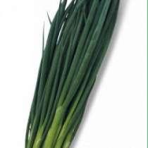 Семена лука на перо Vulcan / Вулкан (Китано), в г.Бельцы