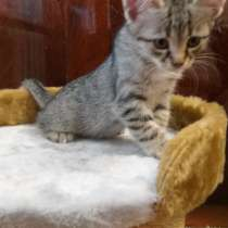 Котята, в Алуште
