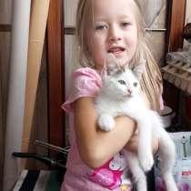 Милый котик в Добрые руки, в Подольске