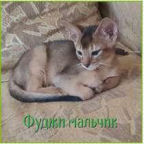 Котята чаузи ф4, в Саратове