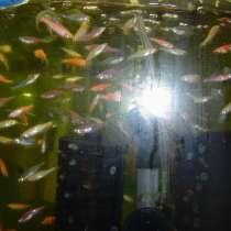 Продажа рыбок с рыборазводни в г. Степногорске, в г.Степногорск