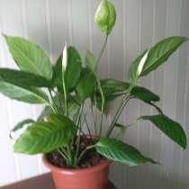 Растения, в Югорске