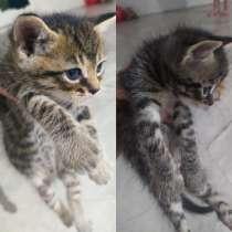 Котики, в г.Мозырь