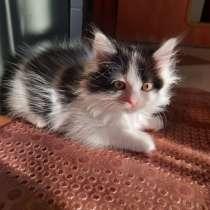 Котенок девочка лохматая 3 мес, в Красногорске