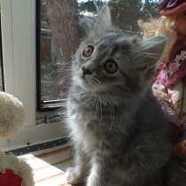 Котята в добрые руки, в Энгельсе