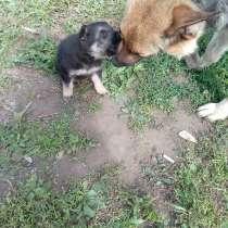 Продажа щенка, в Чусовой