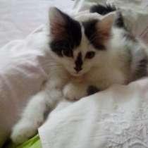 Подарю в хорошие руки симпатичных котят, в г.Тараз