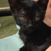 Ищу семью для кошки Зорьки, в г.Тбилиси