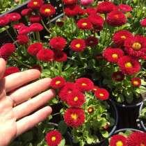 Продам цветы разных сортов, в Белореченске