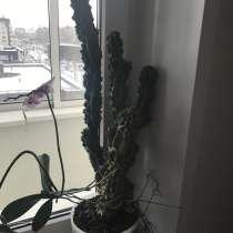 Стильное Южно Американское растение, в Красноярске