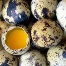 Домашние перепелиные яйца, в Таганроге