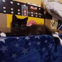 Девочка Шаня котенок ищет дом, в Москве