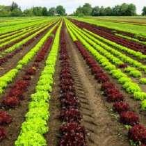 Сельскохозяйственная ферма в Тоскане, Италия, в г.Гроссето