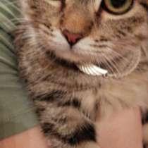 Отдам котенка, в Якутске