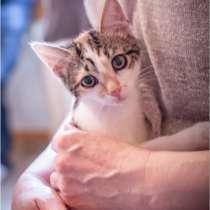 Маруся- трёхцветный котенок. Ласковая малышка, в Москве