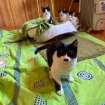 Черноусик - котенок в добрые руки из приюта, в Москве
