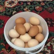 Продажи деревенских куриных яиц, в Нефтекамске