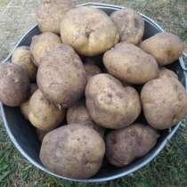 Продам излишки домашнего картофеля в Минске, в г.Минск