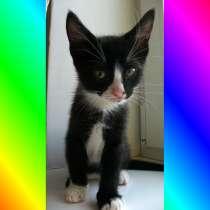 Котята Севастополь. Чёрно-белый мальчик-красавчик, в Севастополе