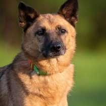 Шикарный пёс ищет дом, в Мытищи